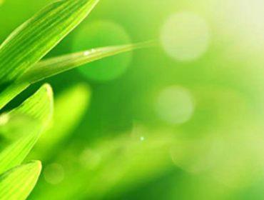 Кооперация за качествена земеделска продукция | ЗКПУ Златен Клас