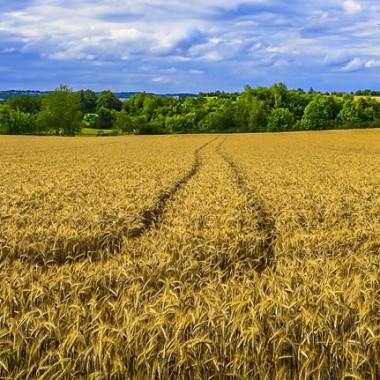 Зърнопроизводство и търговия със семена, торове и препарати за земеделието | Тера Еко 97