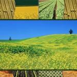 ЕТ Румен Нацев – земеделски производител | Ловеч