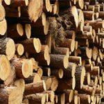 Дърводобив, дърва за огрев, търговия с дървесина в Трън | Манчини ЕООД